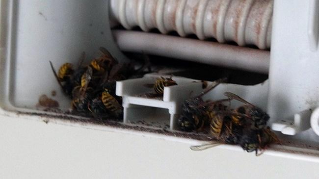 Пчелы в кондиционере