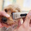 Десять лучших машинок для стрижки собак