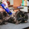 Как выбрать лучшую машинку для стрижки кошек