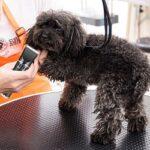 Как выбрать триммер для собак